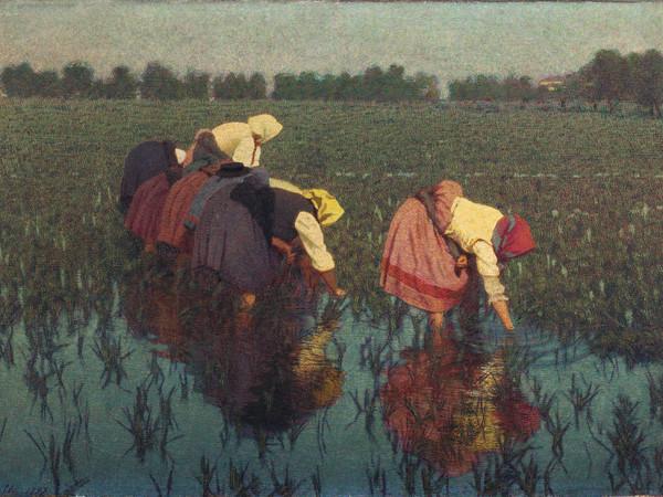 Angelo Morbelli, Risaiuole, 1897